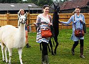 Walk a Llama or Donkey