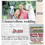 Llama Park wedding